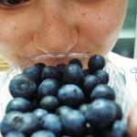 geléia de blueberries